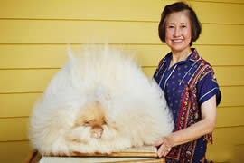世界上毛最长的兔子,巨型安哥拉兔(最长37厘米)