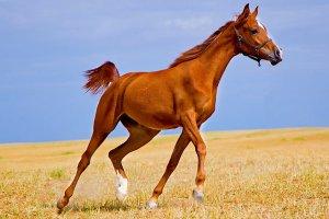 世界十大名马排行