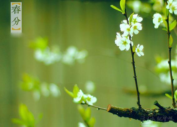 春分节气有哪些习俗 春分的习俗