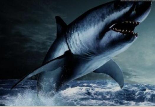 史前巨齿鲨生死谜团,巨齿鲨复活将鲸鱼咬断