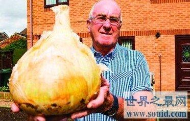 世界最大的洋葱,重达7.7公斤